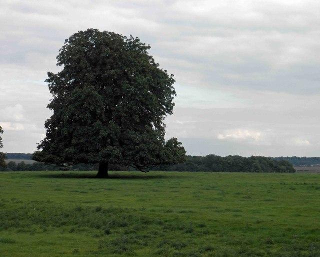Tree in Brodsworth Park
