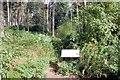 SJ5467 : Path to Urchin's Kitchen in Primrosehill Wood by Jeff Buck