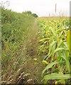 ST6824 : Path to Pevlings Farm by Derek Harper