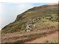 SM8323 : Clifftop and Coast Path by Tony Atkin
