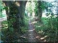 TG3103 : Path to Rockland St Mary by Evelyn Simak