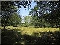 SS7714 : Open woodland, Great Meadow Copse by Derek Harper