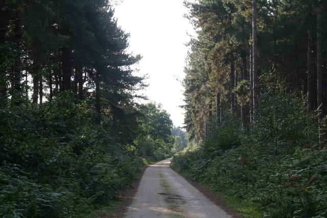 Restricted Byway and farm drive through West Bilney Wood