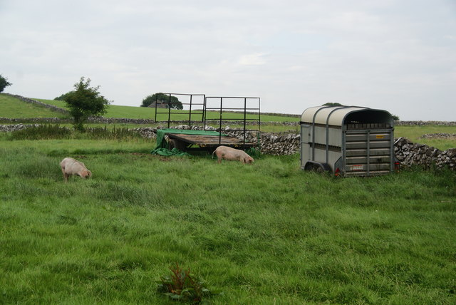 Pigs rooting by a horsebox