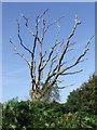 TM1235 : Dead Tree by Keith Evans