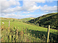 SJ1430 : Sheep pasture above the Lleiriog by Stuart Logan