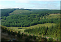 SN8055 : Tywi forest and Cwm Tywi, Powys by Roger  Kidd