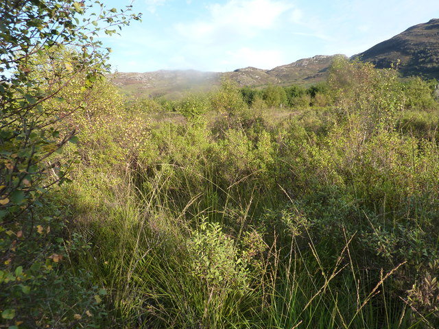 Boggy scrubby land with young generating wood