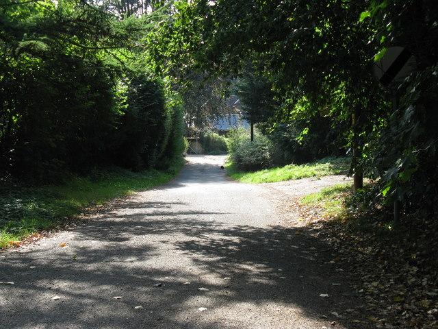 Stodham Lane near Hill Brow