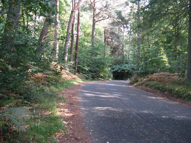 Warren Road Liss Forest