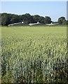 SS7915 : Poultry houses at Doorpark Farm by Derek Harper