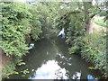 TQ1133 : River Arun at Alfoldean Bridge (1) by Nigel Cox