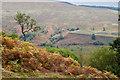 NN2984 : View across Glen Roy by Doug Lee