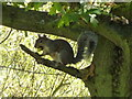 TL0387 : Squirrel with an acorn - Barnwell Country Park by Richard Humphrey