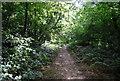 TQ4468 : LOOP in Petts Wood by N Chadwick