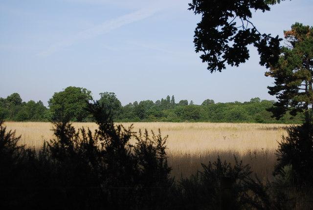 Field by Petts Wood