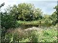 ST3898 : River Usk, Lower Road Pool by Christine Johnstone