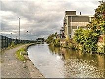 SJ8798 : Ashton Canal by David Dixon