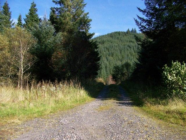Forestry road near Barcaldine
