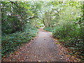 TQ2372 : Woods in Wimbledon Common by Paul Gillett