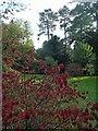 ST8590 : The Colour Circle at Westonbirt arboretum by Steve  Fareham