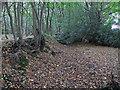TL6100 : Fryerning Wood boundary with Mapletree Lane by Roger Jones