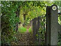 NZ0863 : Path west of Ovingham Middle School by Andrew Curtis