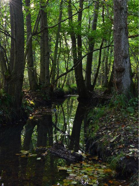 Silchester Brook by Heath Copse, Pamber Heath, Hampshire