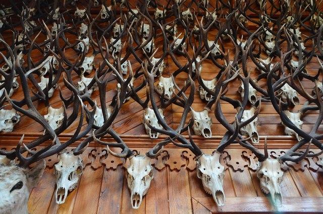 Stags' heads, Mar Lodge Ballroom