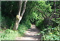 TQ3834 : Sussex Border Path by N Chadwick