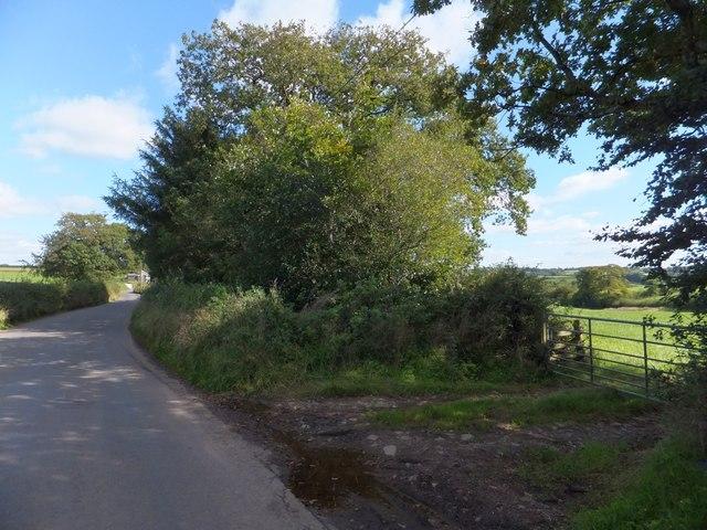 Overgrown verge near Millbarn Cross
