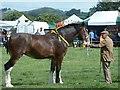 SJ0309 : Horse at Llanfair Show by Penny Mayes