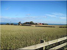 NZ6919 : Fields  of  Wheat  in  October by Martin Dawes