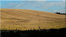 SO9271 : Stubble field in autumn, 2 by Jonathan Billinger