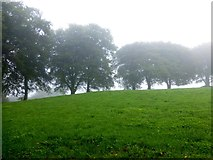 H5776 : Misty at Loughmacrory by Kenneth  Allen