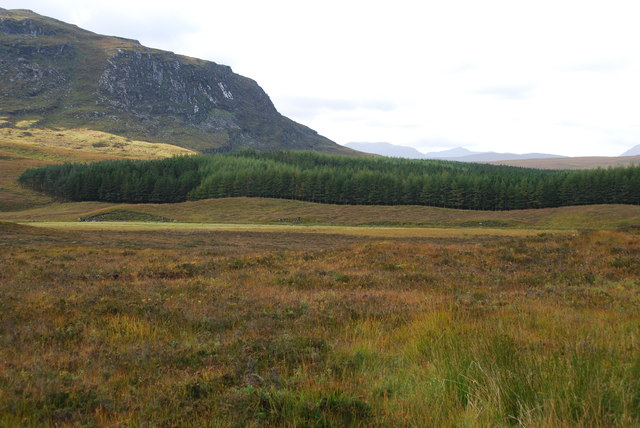 Looking across part of Braemore Forest