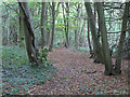 TL6704 : Path in South Wood, Hylands Park by Roger Jones