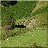 SN8056 : Cwm Tywi, Powys by Roger  Kidd