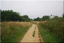 TG2608 : Footpath between River Yare and Whitlingham Great Broad by N Chadwick
