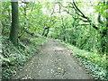 SE0820 : Ellistones Lane through North Wood by Humphrey Bolton