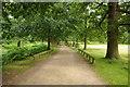 SJ7386 : Parkland road, Dunham Park by Philip Halling