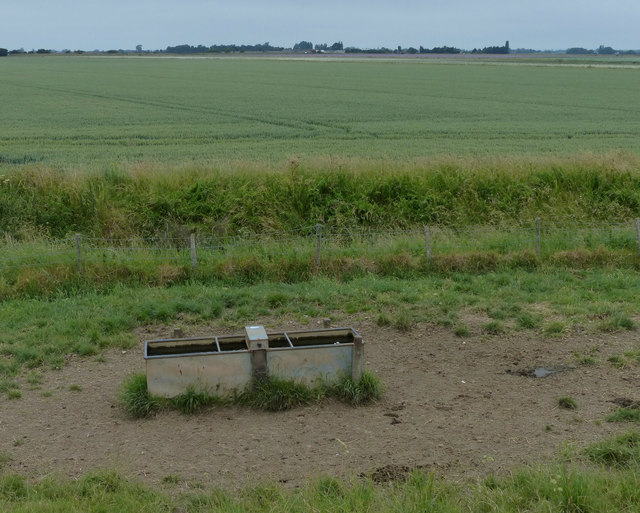Cattle trough near the sea bank