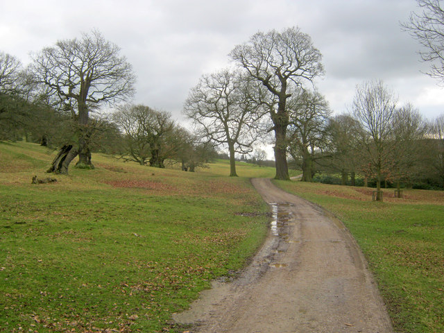 Track through Chatsworth Park