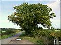 SO9147 : Oak by Chevington Lane by Jonathan Billinger