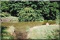 TQ4771 : River Cray by N Chadwick