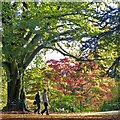 ST3087 : An autumn walk with the dog, Belle Vue Park, Newport by Robin Drayton