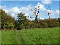 TQ2394 : London Loop and Two Dead Trees by Des Blenkinsopp