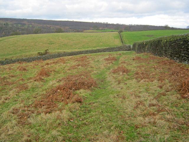 Meadows at Dobb Edge