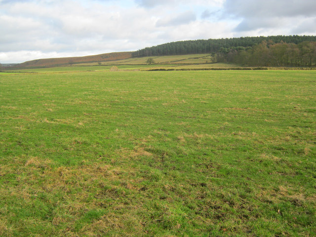 Grazing meadows at Parkgate