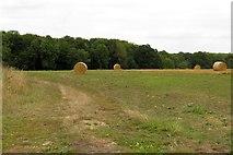 SP4200 : Rolls of hay on Rose Hill by Steve Daniels